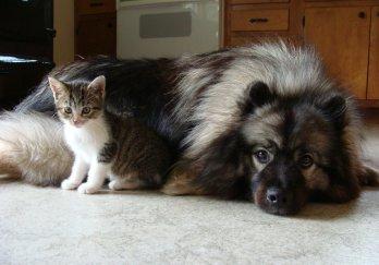 Best of Friends.