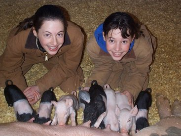 Girls and cross piglets.