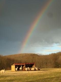Summer rainbow.