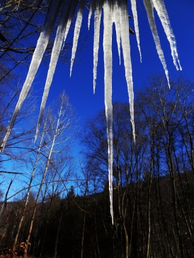 Icicles against the clear, winter, sky.