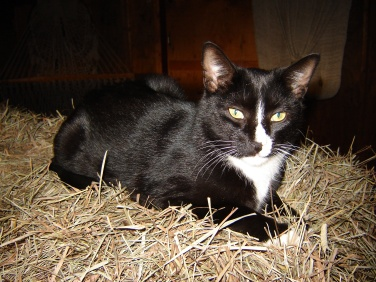 Barn cat.