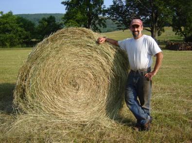 Dry grass round bales.