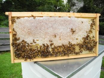 Honey harvest.