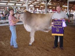 Grand Champion Dairy Beef.