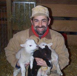 Triplet cross lambs.