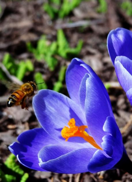 More than just a pretty flower http://wp.me/p1yRFa-Rf