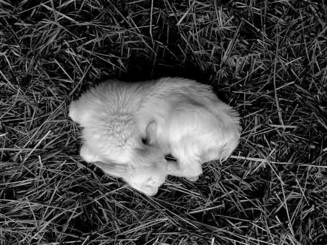 Newborn http://wp.me/s1yRFa-newborn