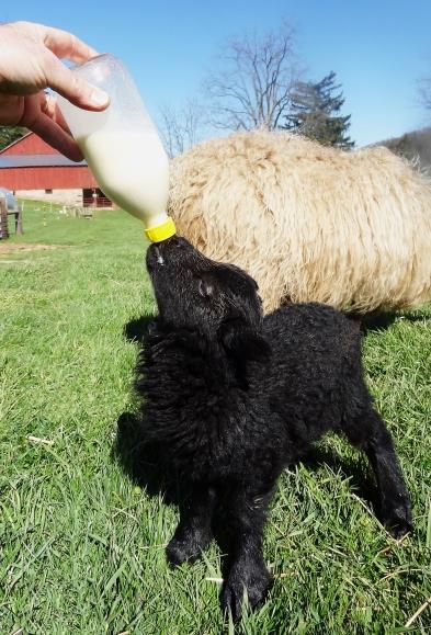Bottle babies http://wp.me/p1yRFa-Yv