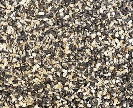 Chalkbrood http://wp.me/p1yRFa-12p