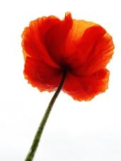 Flower power http://wp.me/p1yRFa-17j