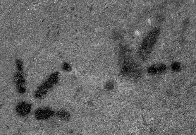Dinosaur tracks http://wp.me/p1yRFa-1gk