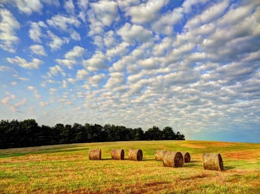 Hay making continues http://wp.me/p1yRFa-1su