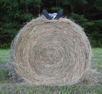Hay http://wp.me/s1yRFa-hay