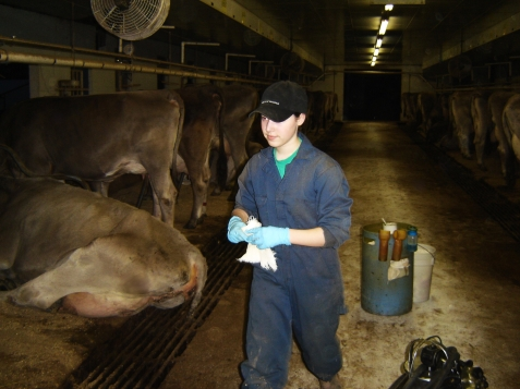 Milking in the good old days ... here Molly is prepping cows when we were once asked to act as relief milkers.