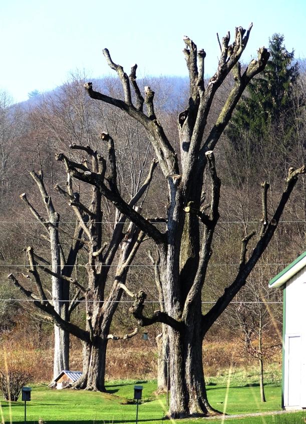 Ampu-tree, http://wp.me/p1yRFa-2dd