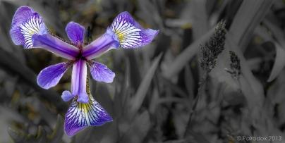 Island botany, http://wp.me/p1yRFa-3eo