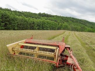 Make hay, http://wp.me/p1yRFa-3f5