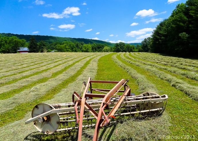 Rake hay, http://wp.me/p1yRFa-3fl
