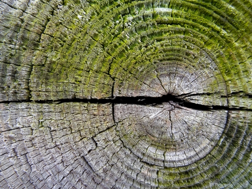 Making sense of xylem http://wp.me/p1yRFa-3ys