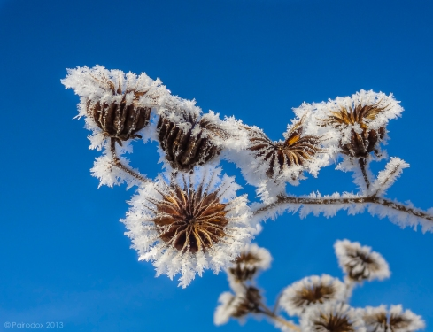 "Dare I say it … ""Hoarfrost,"" http://wp.me/p1yRFa-3Rv"