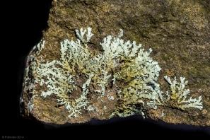 Likin' lichen, http://wp.me/p1yRFa-3Y9