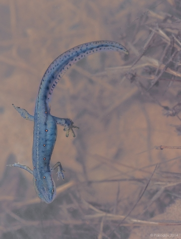 Signs of spring, http://wp.me/p1yRFa-471