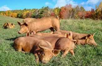 A portrait in red, http://wp.me/p1yRFa-44y