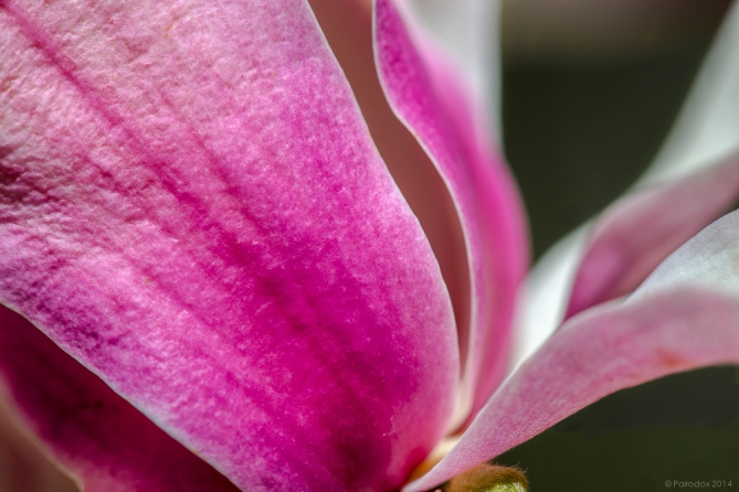 The surest signs of spring, http://wp.me/p1yRFa-4bY