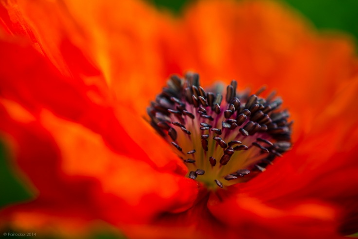 The colors of spring, http://wp.me/p1yRFa-4ga