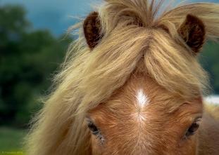 Equus, http://wp.me/s1yRFa-equus