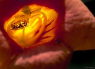 Illuminating an interloper, http://wp.me/p1yRFa-4q0