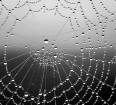 Wisdom of the spider, http://wp.me/p1yRFa-4L6
