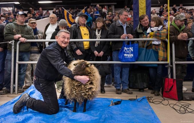 Jack, our shearer and Linda, our Shetland sheep.