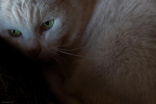 Jellicle cat, http://wp.me/p1yRFa-55Z